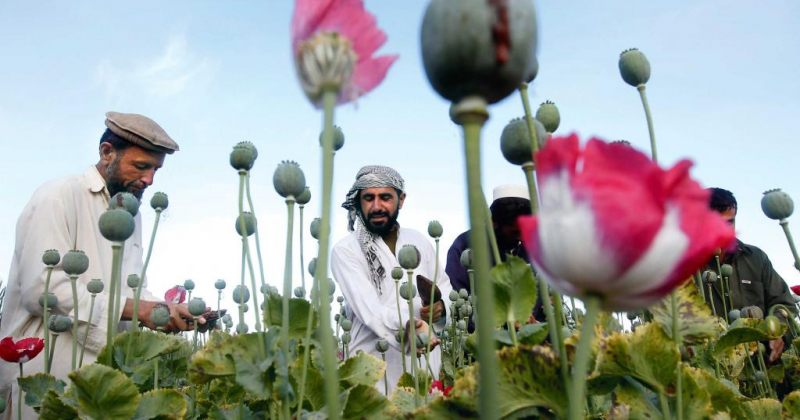 ავღანეთი –  შეუსრულებელი მისია