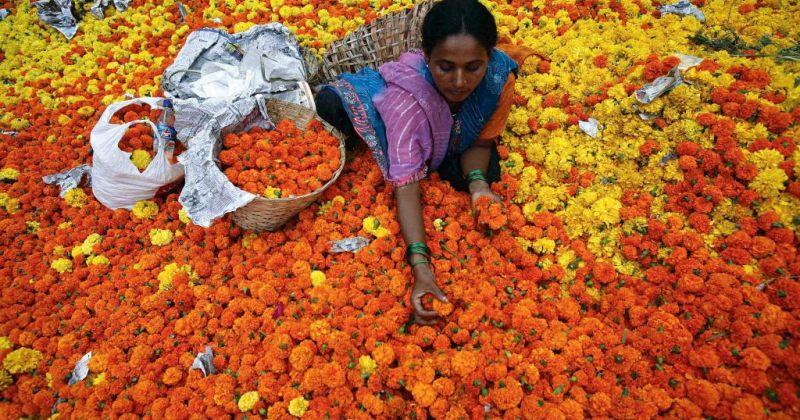 რეფორმების ქარი  ინდოეთში