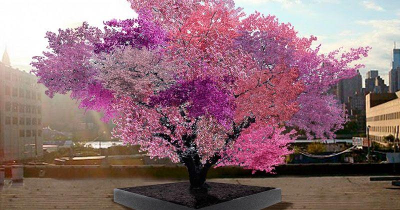ეს ხე 40 სახეობის ხილს ერთდროულად მოისხამს