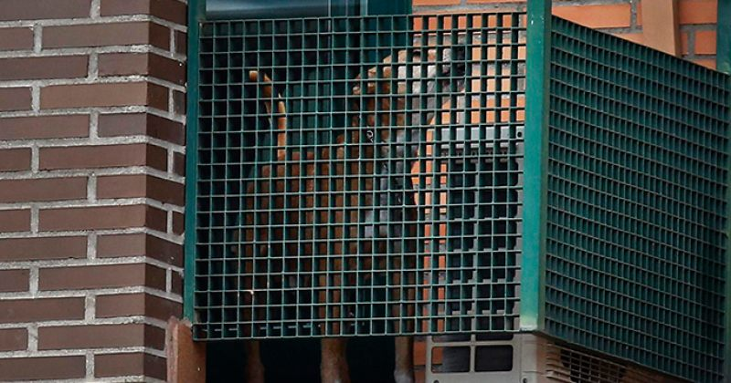 მცირეწლოვნის თანდასწრებით ცხოველის წამება 3 წლამდე პატიმრობით დაისჯება - კანონპროექტი