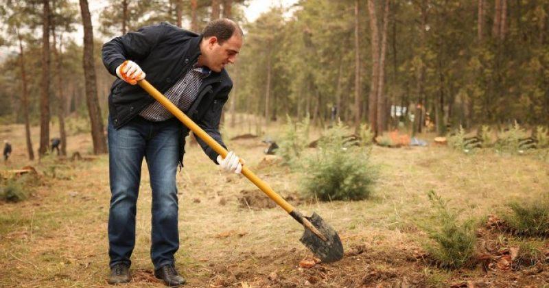 მერიამ 19 ათასით მეტი ორმო ამოთხარა, ვიდრე ხე დარგო