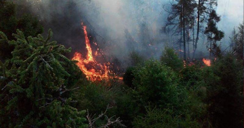 ბორჯომის რაიონში ტყე იწვის