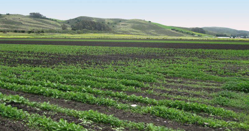 მიწების მორატორიუმი არსებულ საკუთრების უფლებას ზღუდავს - ბიზნესომბუდსმენი