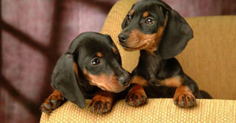კანონპროექტით, კორპუსის ბინაში 5-ზე მეტი შინაური ბინადარი ცხოველის ყოლა იკრძალება