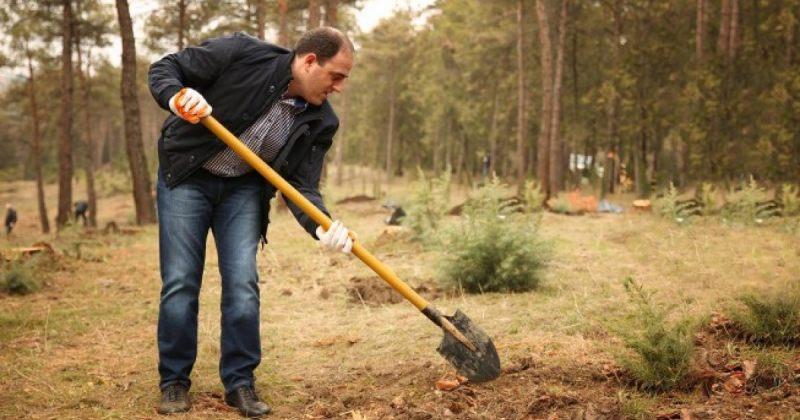 აუდიტი: ნარმანიას დროს დარგული ხეების 1/3 - 132,000 ხე გახმა ან აღარ არსებობს