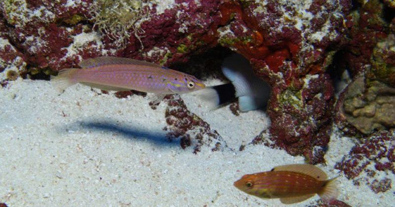 ჰავაიზე, სავარუდოდ, სამი აქამდე უცნობი სახეობის თევზი აღმოაჩინეს