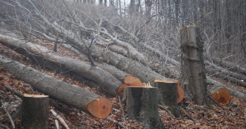 ქრთამის აღებისთვის ბორჯომის სატყეო უბნის ტყის მცველი დააკავეს