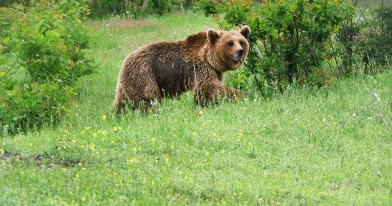 მგლები და დათვები ახალი ზოოპარკის პირველი ბინადრები იქნებიან