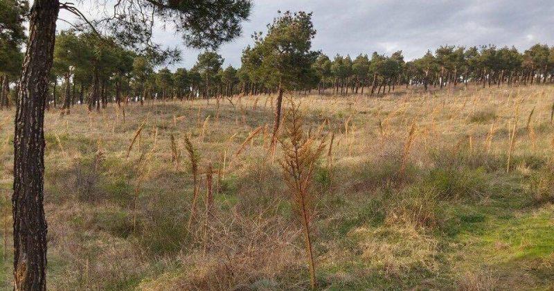 ხოშტარია: მილიონი ხის ნაცვლად მილიონი ხის ჯოხი შეგვრჩა