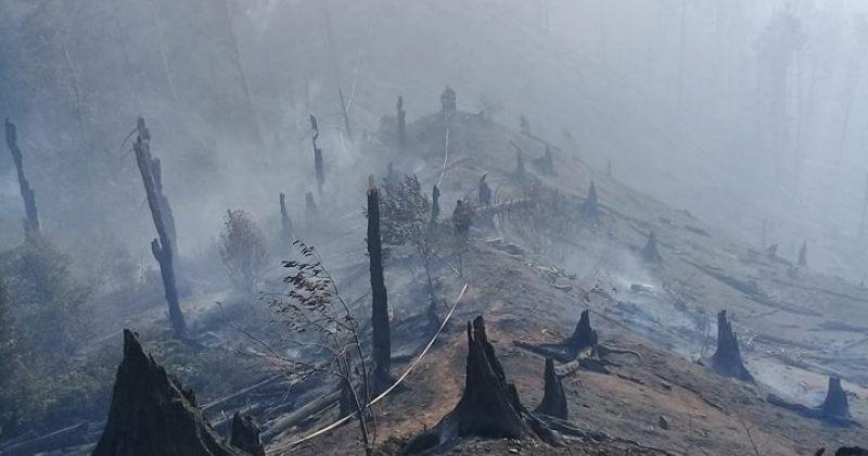 საგანგებო სიტუაციების სააგენტო: ბორჯომში ხანძარი ლოკალიზებულია, დაიწვა 5 ჰექტარი