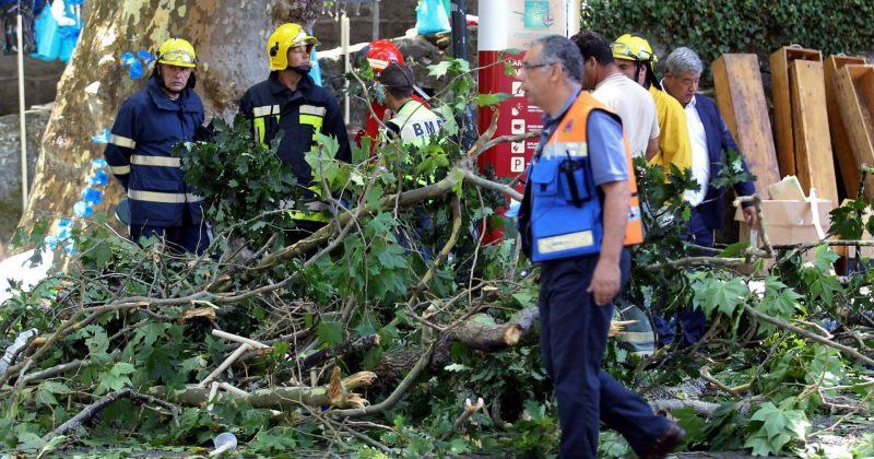 პორტუგალიაში, ხის წაქცევის შედეგად სულ მცირე 11 ადამიანი გარდაიცვალა
