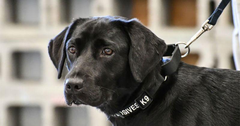 CIA-დან გაგდებული ძაღლი ბომბების ამოცნობის ნაცვლად თამაშობდა