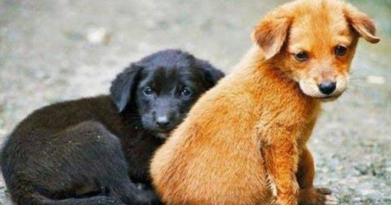 NGO-ები ცხოველთა დაცვის მიმართულებით კანონის გამკაცრების ინიციატივით გამოდიან