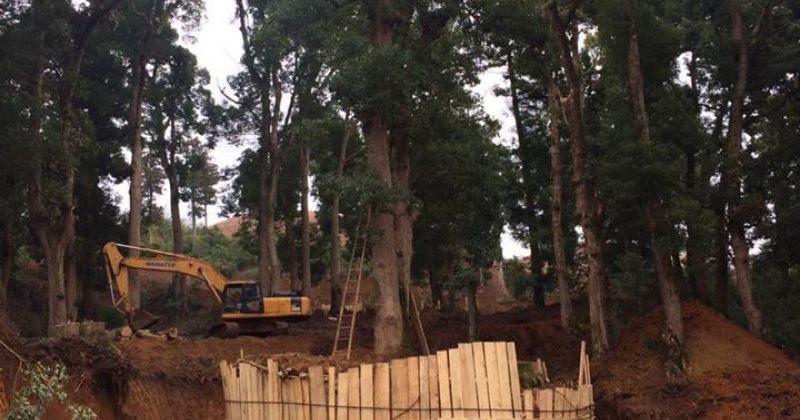 ბიძინა ივანიშვილსშეკვეთილში, დენდროლოგიურ პარკში მორიგი ხე გადააქვს