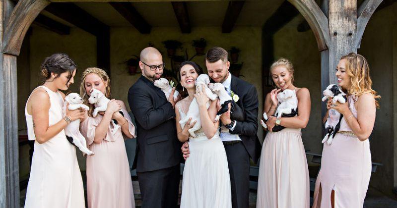 საქორწილო თაიგულის ნაცვლად, ქორწილი თავშესაფარიდან აყვანილი ლეკვებით