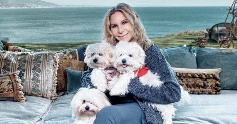ბარბარა სტრეიზანდმა თავისი ძაღლისგან ორი კლონი შექმნა