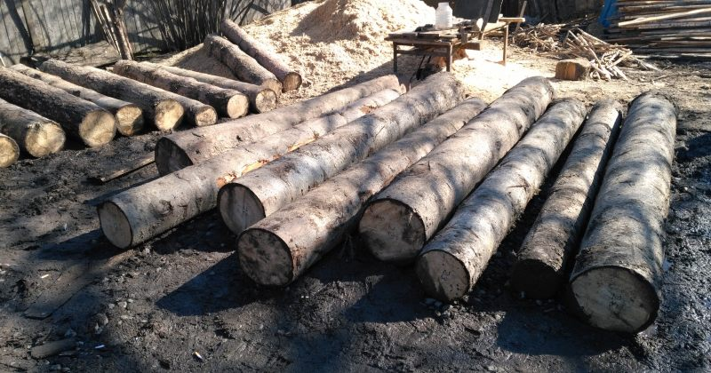 თებერვალში ხე-ტყის უკანონო მოპოვებისა და ტრანსპორტირების 573 ფაქტი გამოავლინეს
