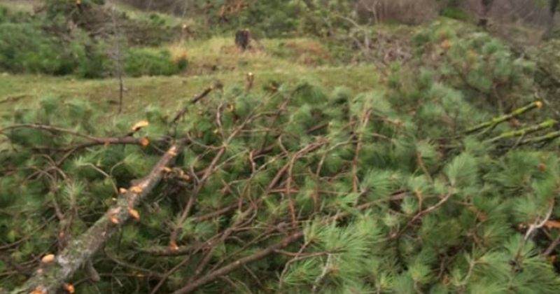 გარემოს დაცვა: სახელმწიფო ელექტროსისტემის კონტრაქტორმა კომპანიამ 110 ძირი ხე მოჭრა