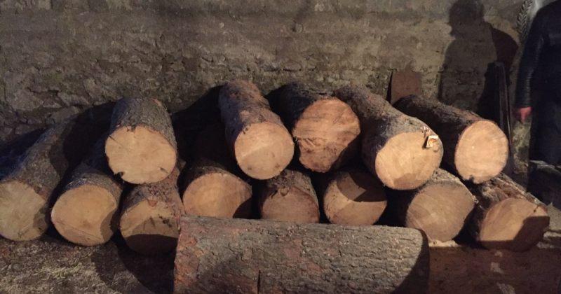გარემოს დაცვა: მარტში ხე-ტყის უკანონო მოპოვება-ტრანსპორტირების 758 ფაქტი გამოვლინდა