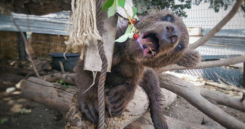 თბილისის ზოოპარკში დათვი მაყვალს მიირთმევს