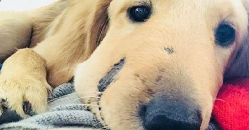 ძაღლმა თავისი პატრონი ჩხრიალა გველისგან იხსნა