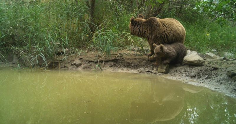 დათვები ვაშლოვანის დაცულ ტერიტორიებზე [ფოტოები]