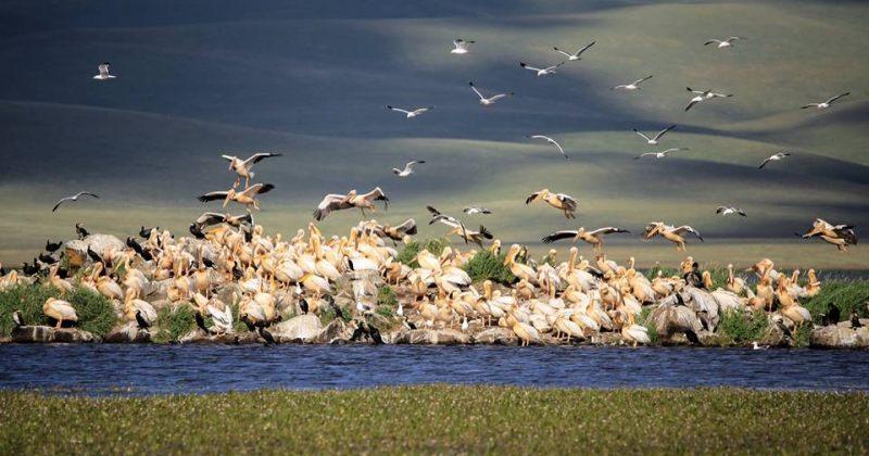 გადამფრენი ფრინველები ჯავახეთის ეროვნულ პარკში [ფოტო]