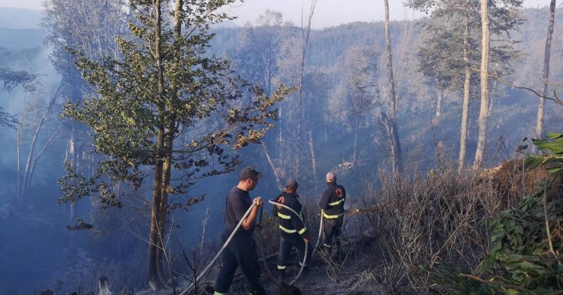 ხაშურში ტყის ხანძრის ჩასაქრობად დამატებითი ტექნიკა ჩაერთვება