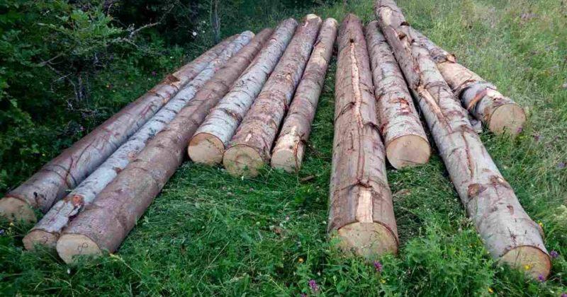 ივლისში ხე-ტყის უკანონო მოპოვებისა და ტრანსპორტირების 265 ფაქტი გამოავლინეს