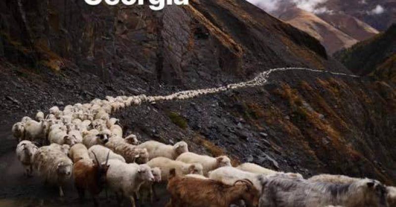 საქართველო - ცხვრის ფარის ფოტო ანუკი არეშიძის ინსტაგრამიდან