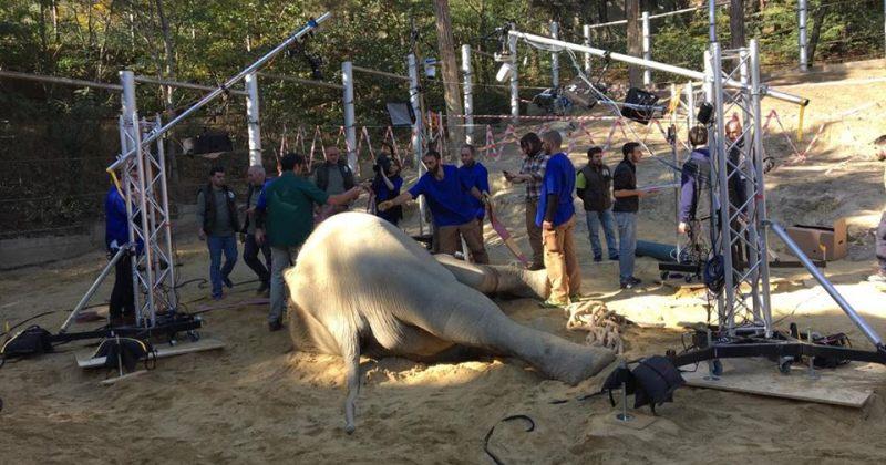 სპილო გრანდიმ გაიღვიძა (ვიდეო)