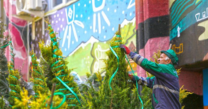მერია: საშემოდგომო გამწვანების ფარგლებში თბილისში 10 000 ხე-მცენარე დაირგვება