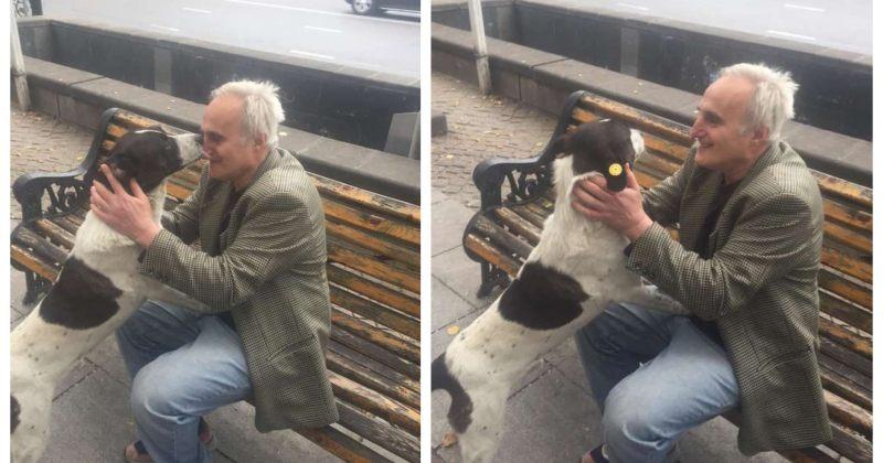 პატრონმა სამი წლის წინ დაკარგული ძაღლი რუსთაველის გამზირზე იპოვა - ვიდეო
