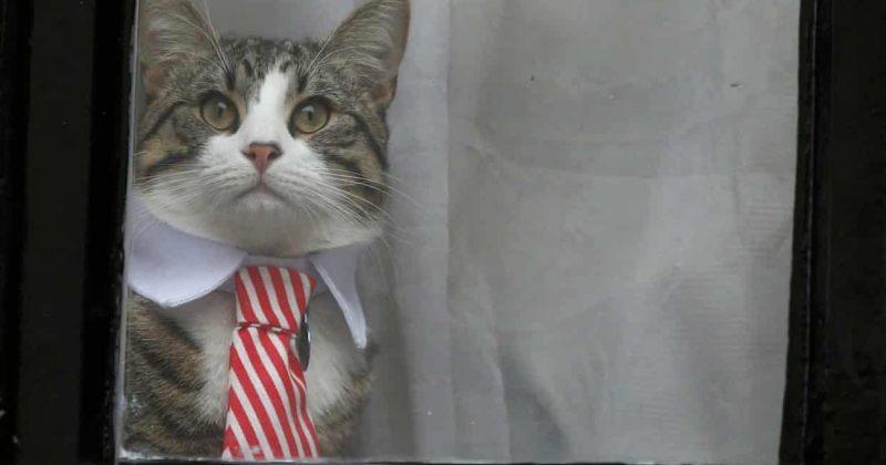 ეკვადორი ასანჟს მოუწოდებს პოლიტიკური კომენტარები შეწყვიტოს და კატას უკეთ მოუაროს