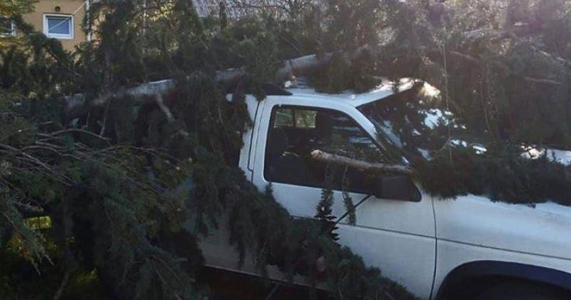 დასავლეთ საქართველოში ძლიერი ქარია, სახურავი გადახადა 60 სახლს, წააქცია 25 ხე [ფოტოები]