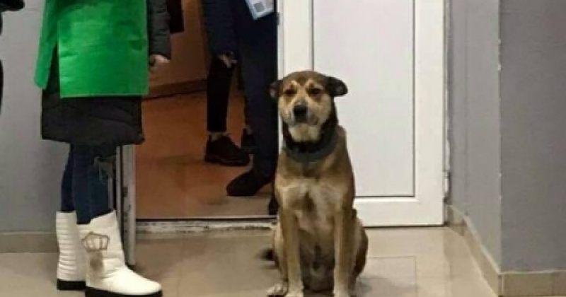 ძაღლები საარჩევნო უბნებზე - ფოტოები
