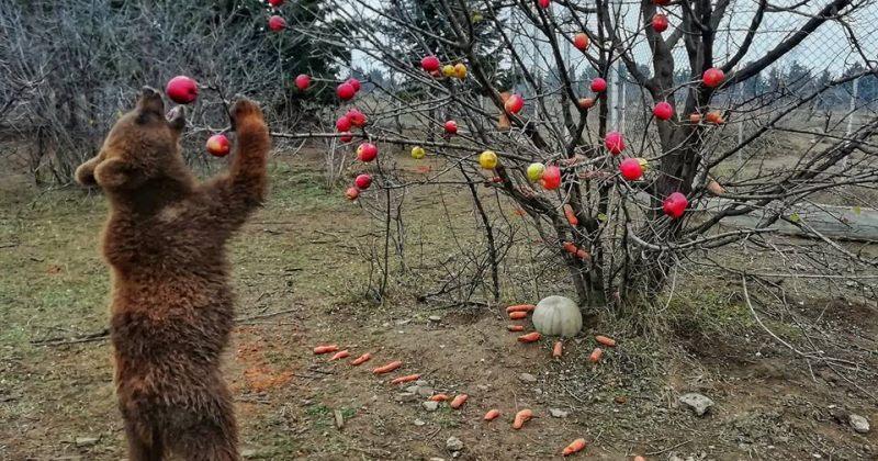 """დათვების """"ნაძვის ხე"""" თბილისის ზოოპარკში"""