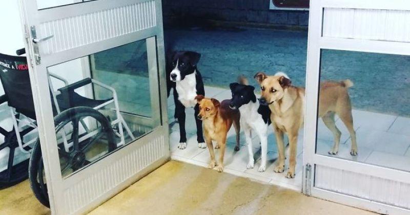 უსახლკარო კაცს საავადმყოფოში 4 ძაღლი ელოდებოდა
