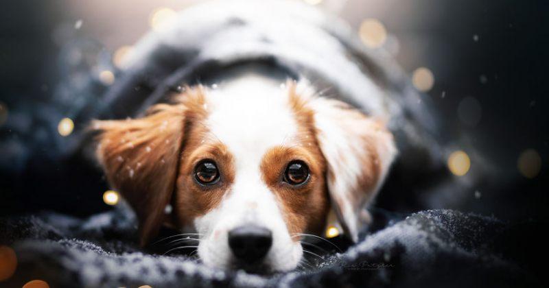 სხვადასხვა ჯიშის ძაღლები - სურათები