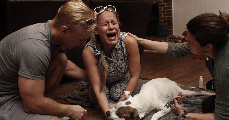 პატრონების ემოციები მათი ძაღლების სიკვდილამდე და მის შემდეგ -  სურათები