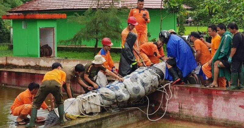 ინდონეზიაში ნიანგმა, რომელიც ფერმაში არალეგალურად ჰყავდათ, ქალი მოკლა