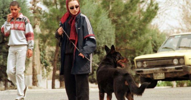 თეირანის ქუჩებში ძაღლების გასეირნება აკრძალეს