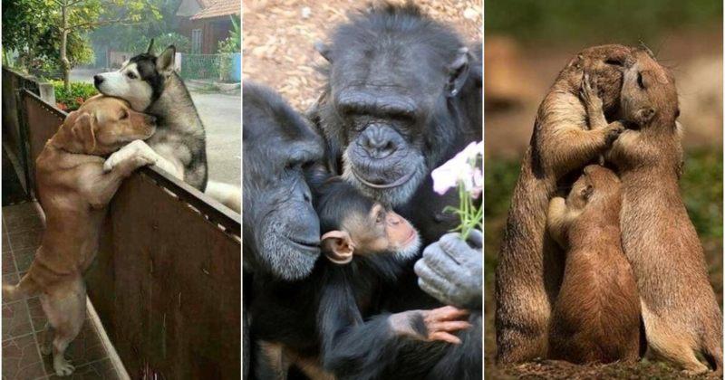 შეყვარებული ცხოველები და მათიოჯახური ფოტოები