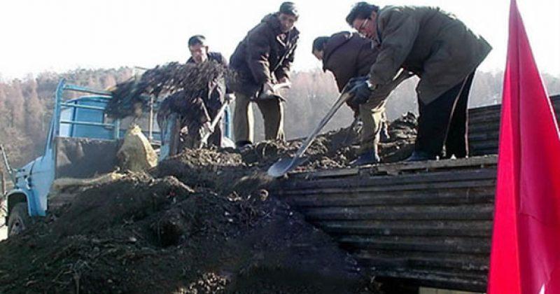 ჩრდილოეთ კორეა სასუქის დეფიციტის გამო მოსახლეობას განავლის ჩაბარებას სთხოვს