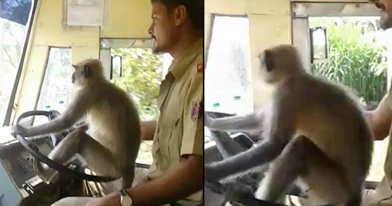 ინდოეთში ავტობუსს, რომლითაც 30 ადამიანი მგზავრობდა, 10 წუთი მაიმუნი მართავდა - ვიდეო
