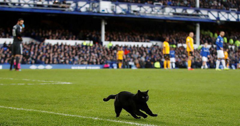 შავი კატა და მტრედი ინგლისის პრემიერ ლიგაში (ვიდეო)
