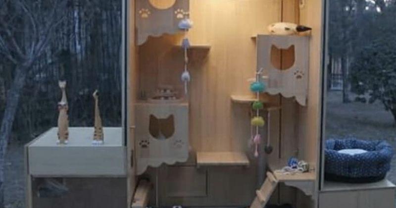 კაცმა ქუჩის თავშესაფარი შექმნა, რომელიც 174 კატას უვლის და სახის ამოცნობაც შეუძლია