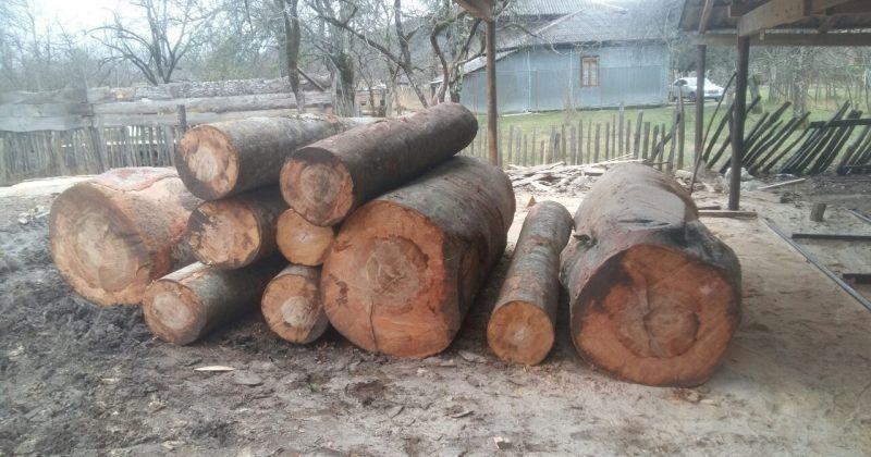 იანვარში ხე-ტყის უკანონო მოპოვებისა და ტრანსპორტირების 401 ფაქტი გამოვლინდა