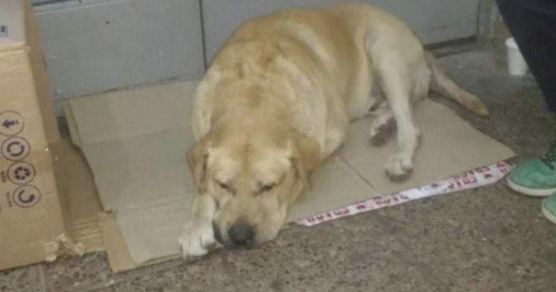 ძაღლმა არ იცოდა, რომ პატრონი გარდაიცვალა  და დიდი ხანი საავადმყოფოსთან ელოდებოდა