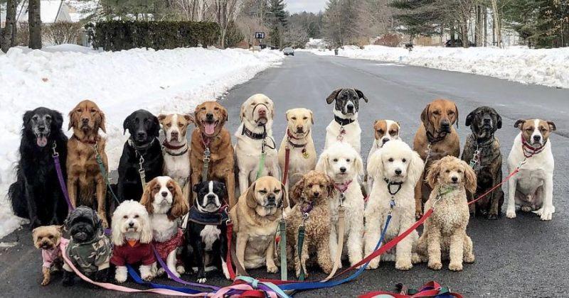 ძაღლები, რომლებიც ყოველ დღე ერთად სეირნობენ და ჯგუფურ სურათებს იღებენ
